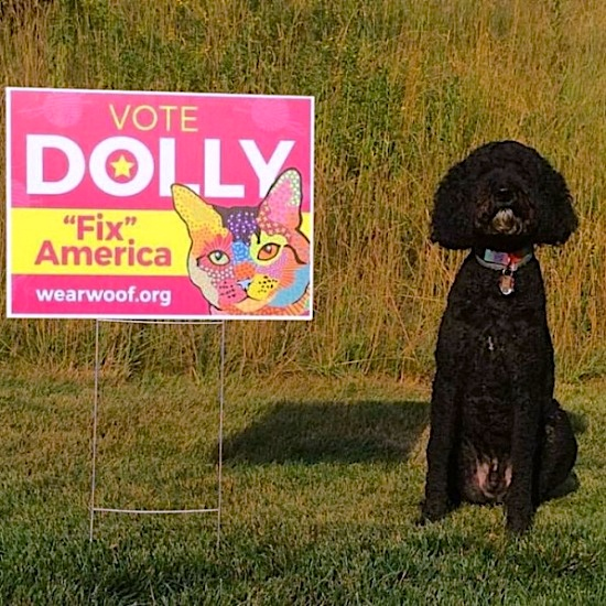 ocreations-pittsburgh-graphic-design-vote-dolly-yard-sign
